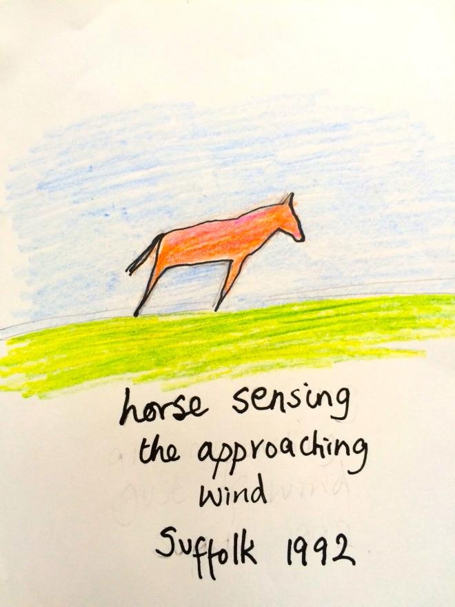Horse sensing