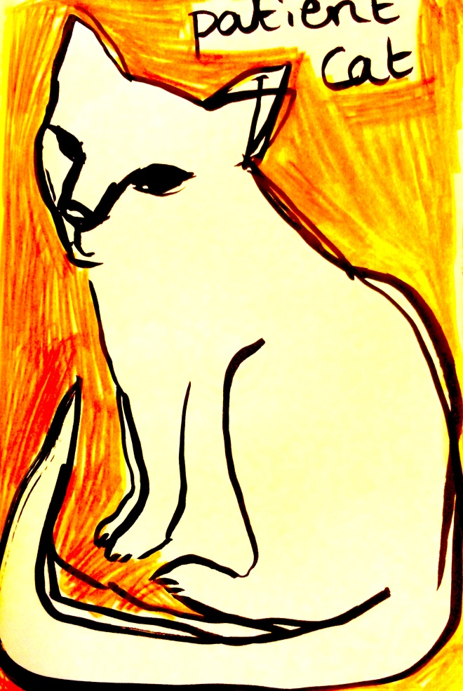 Patient cat